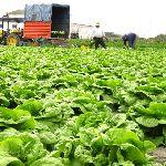 Nabór wniosków do projektu pomoc dla młodych rolników